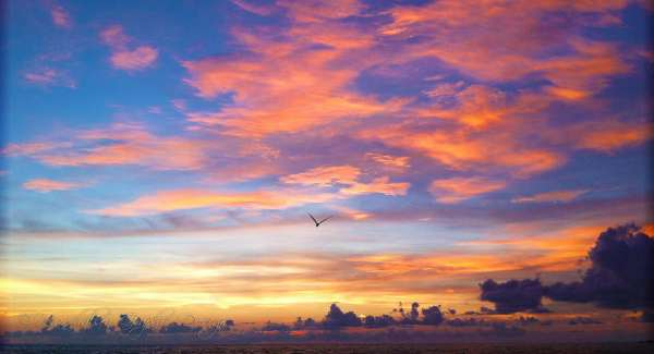 Sunrise with bird in sky