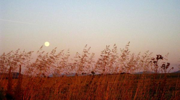 moonlit evening across fields