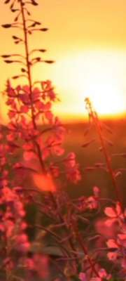 Sunrise across a field
