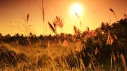 morning sunrise over fields
